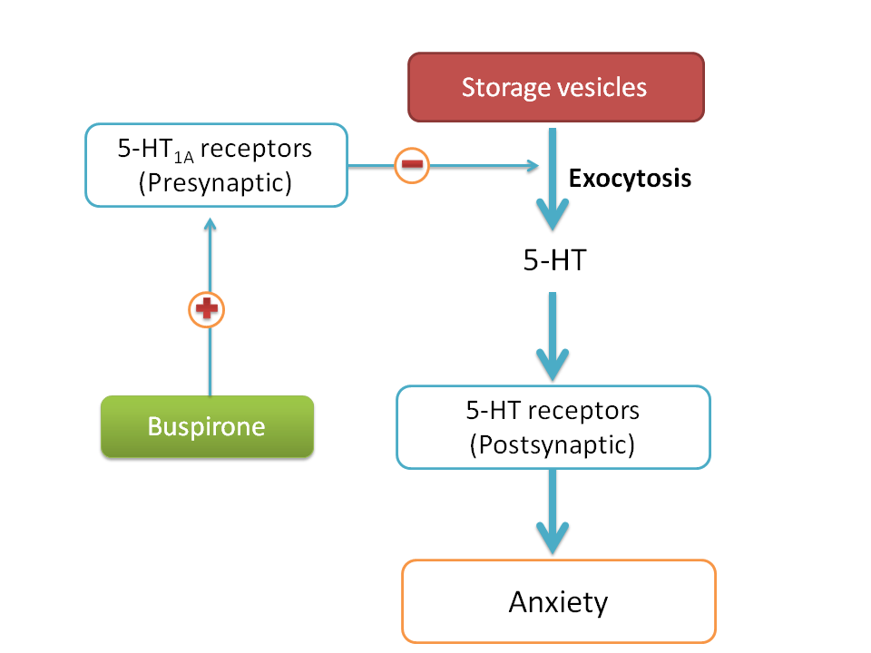 5-HT1A receptor agonists decrease 5-HT transmission hence decrease anxiety