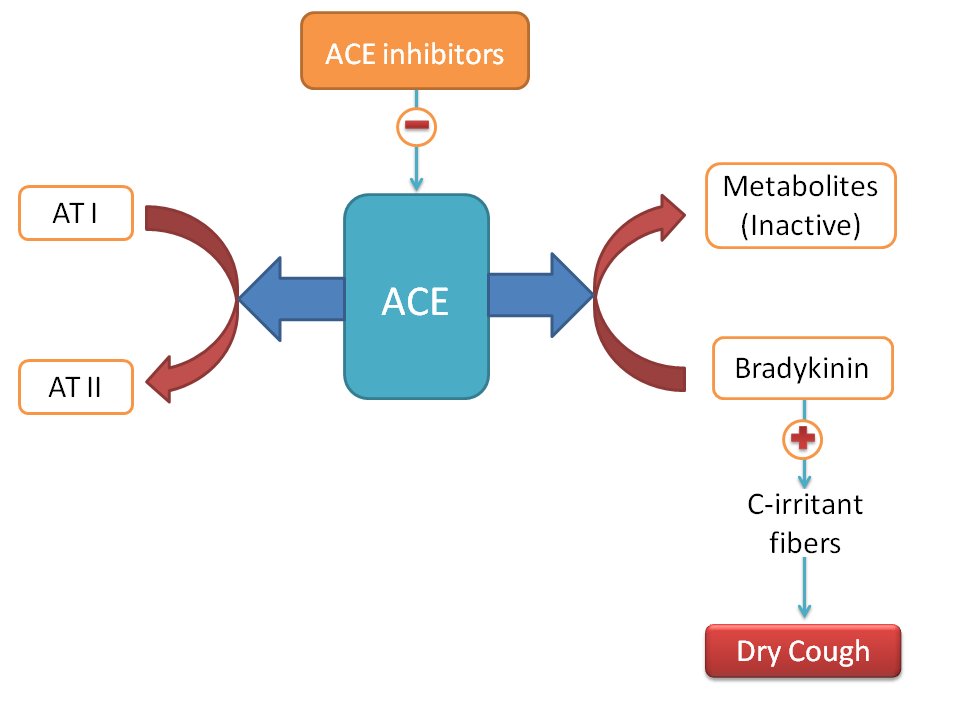 ACE inhibitors produce dry cough due to accumulation of bradykinin