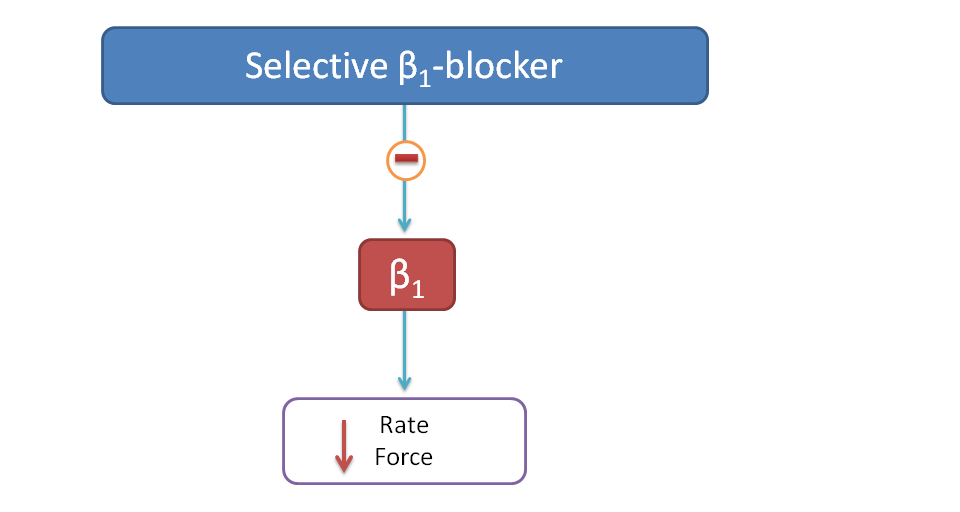 Effect of selective beta blockers on heart