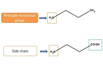 Role of amine group according to functional group priority table