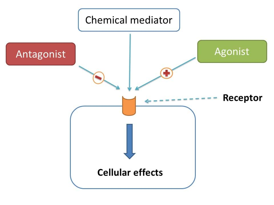cellular effects Review direct and indirec t cellular effects of asparta me on the brain p humphries 1,2, e pretorius 1 and h naude «1 1 department ofanatomy , universitypretoria, gauteng, south africa and 2 the.