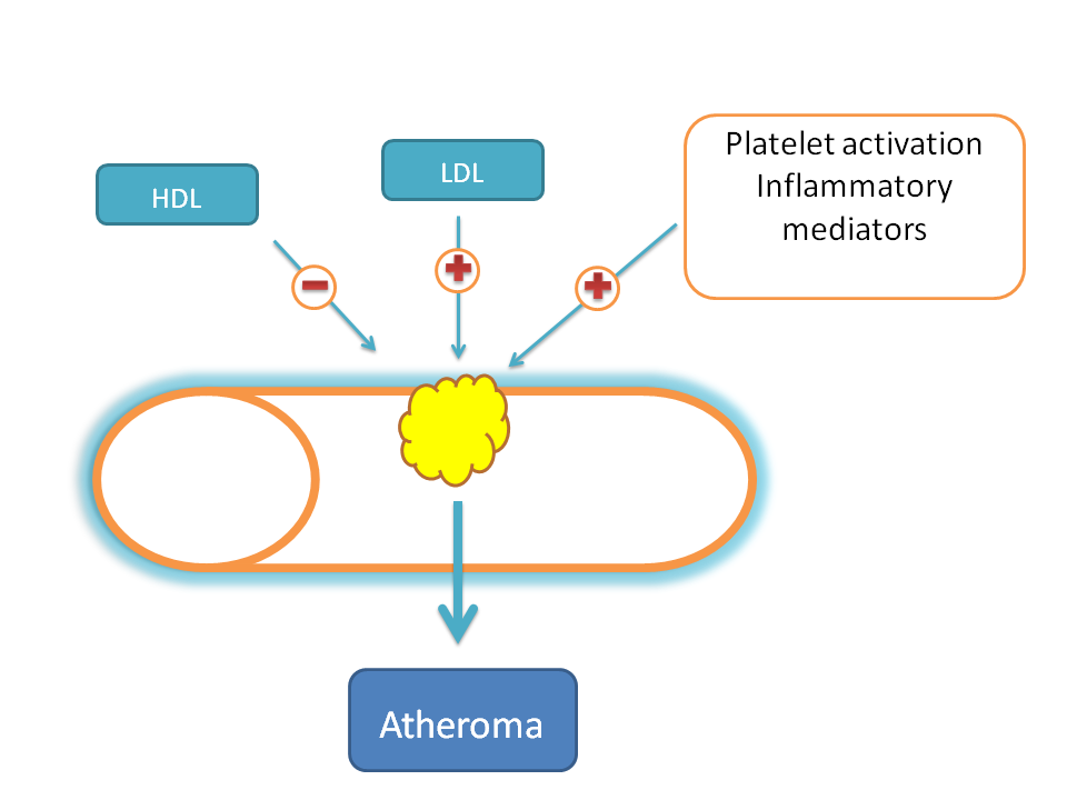 LDL, platelets, inflammatory mediators enhance atherogenesis while HDL decreases