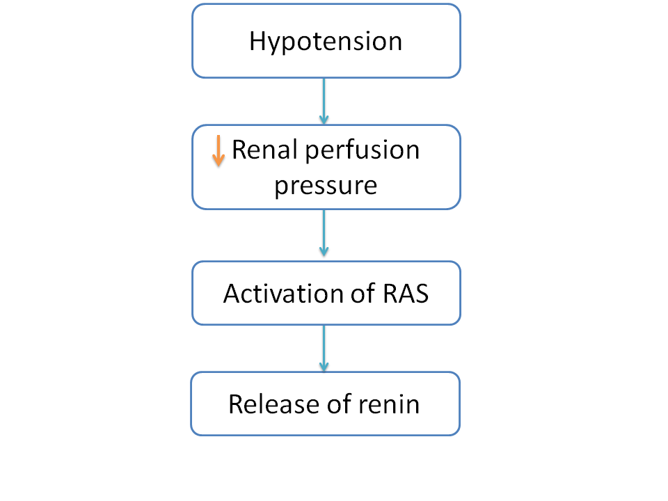 Hypotension induced activation of Renin-angiotensin-system