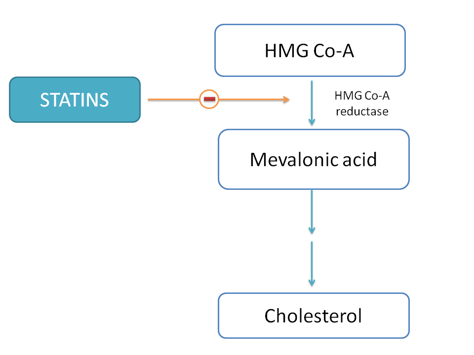 Statins inhibit HMG Co-A reductase thereby inhibit cholesterol biosynthesis