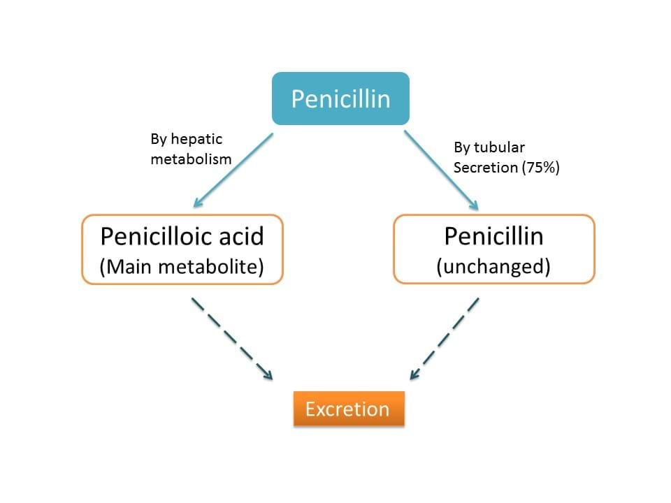 elimination of penicillins