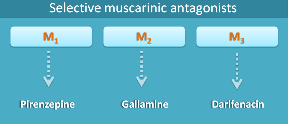selective muscarinic antagonists