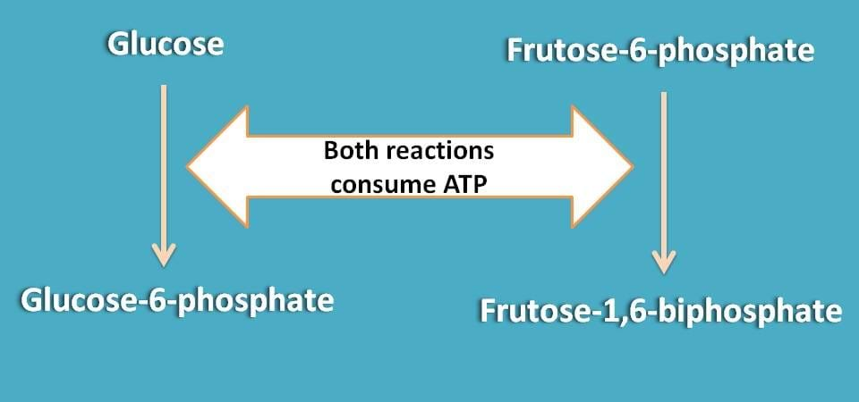 energy consuming reactions in glycolysis