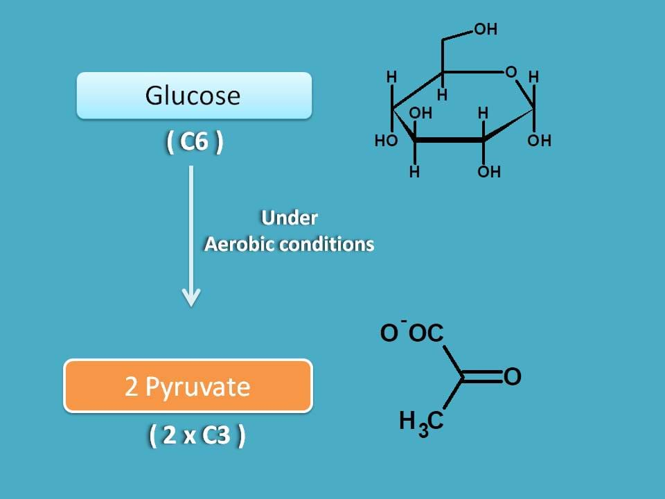 glycolysis in aerobic conditions