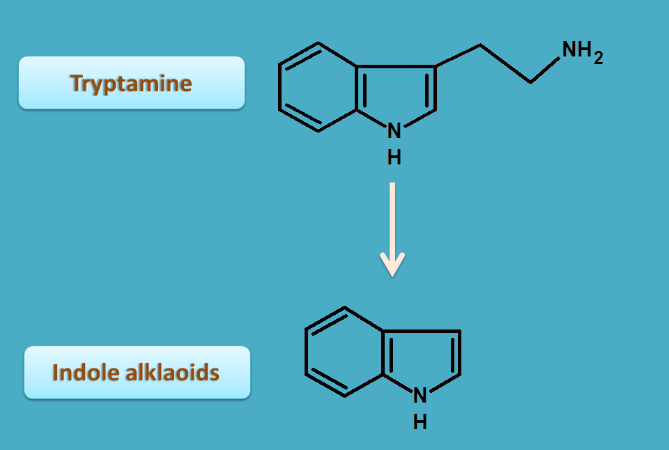conversion of tryptamine to indole