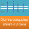 Clinically important drugs acting on sodium and calcium channels