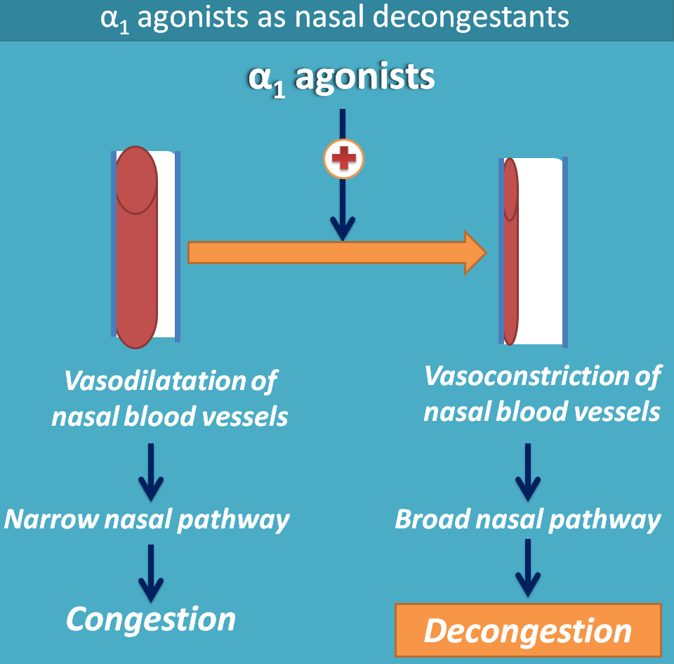 Nasal decongestion by alpha1 agonists