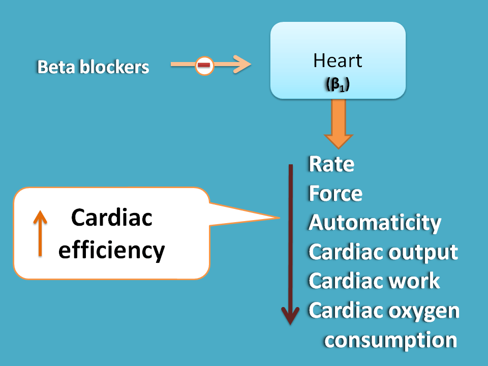 action of beta blcokers on heart