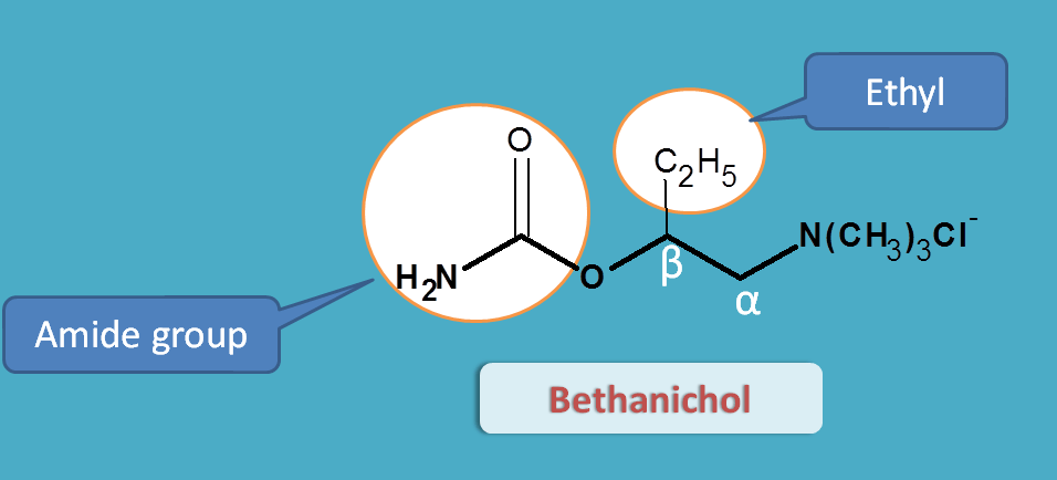 structure of bethanechol