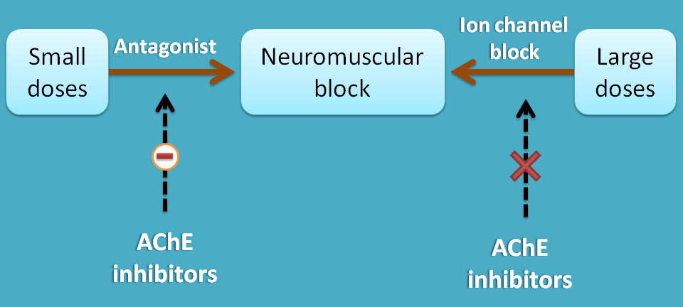 neuromuscular blockers at high dose
