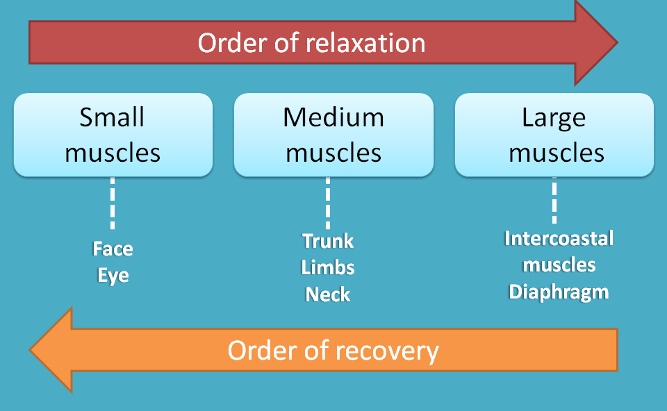 order of recovery of neuromuscular block