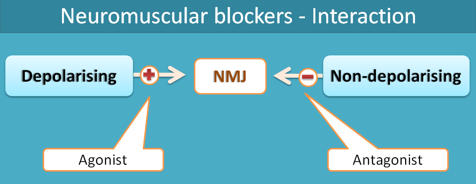 Nature of interaction of neuromuscular blockers