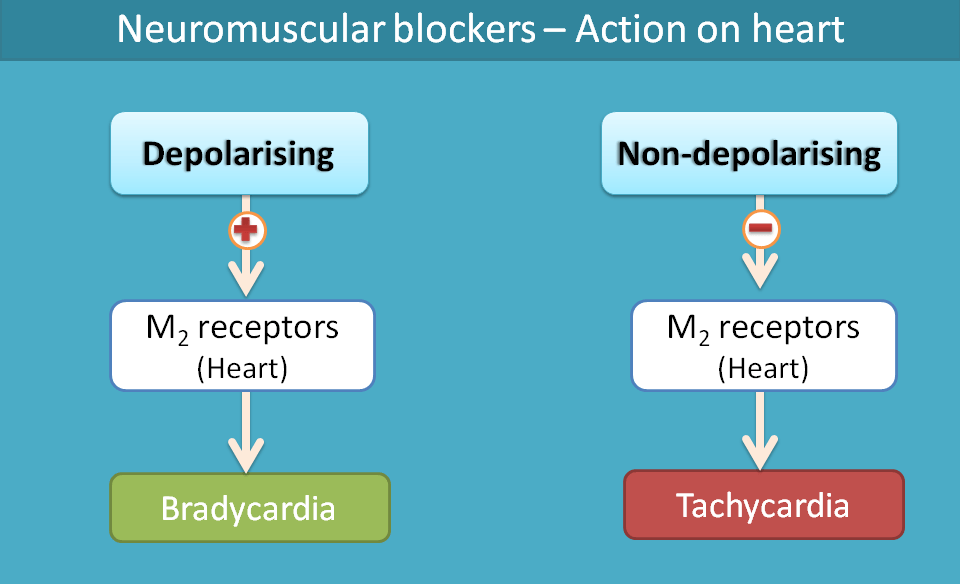 side effect of neuromuscular blockers on heart