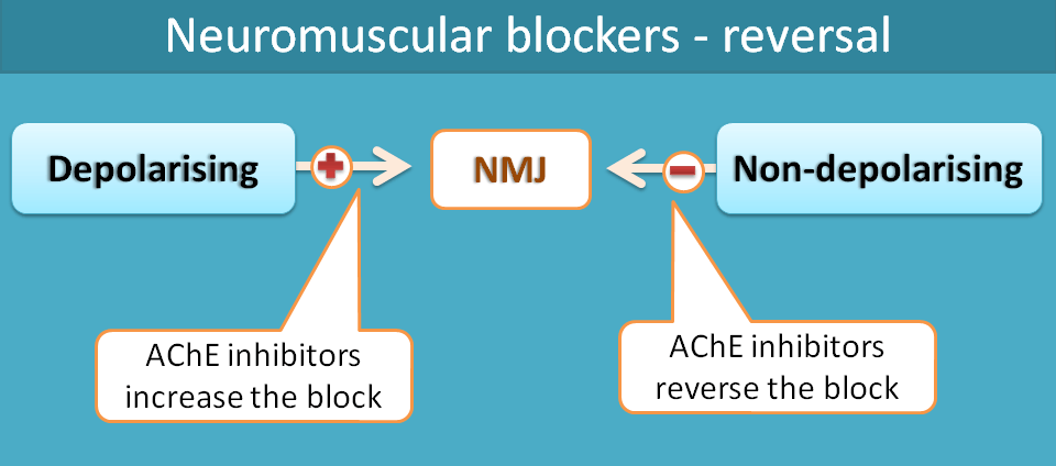 reversal of neuromuscular block