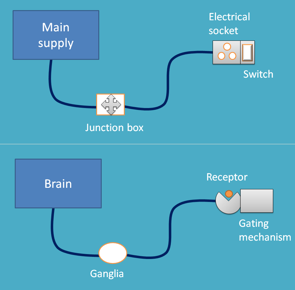 neurons can be compared with electrical wires