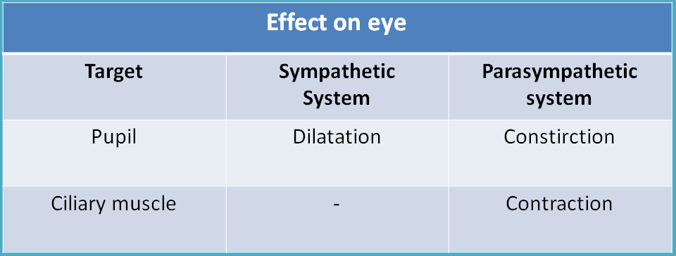 Opposite action of ANS divisions at eye