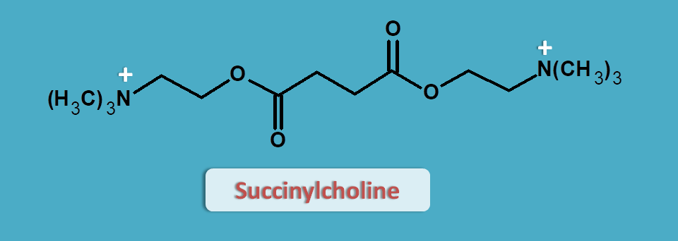 structure of succinylcholine